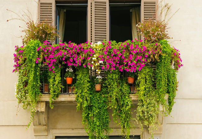 Trồng hoa ban công xinh đón hè