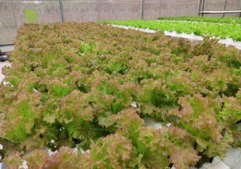 trang-trai-giao-duc-e-green-garden