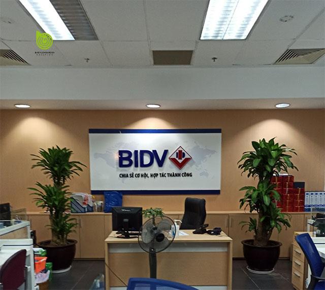 Cung cấp cây văn phòng tại Ngân Hàng BIDV